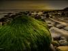 Seaweed in Half Light