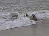 Norfolk Seal#Ellen Sandford (Under 12)